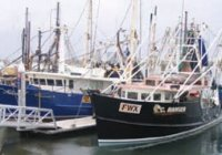 Seafood Trawlers on the Gold Coast Queensland